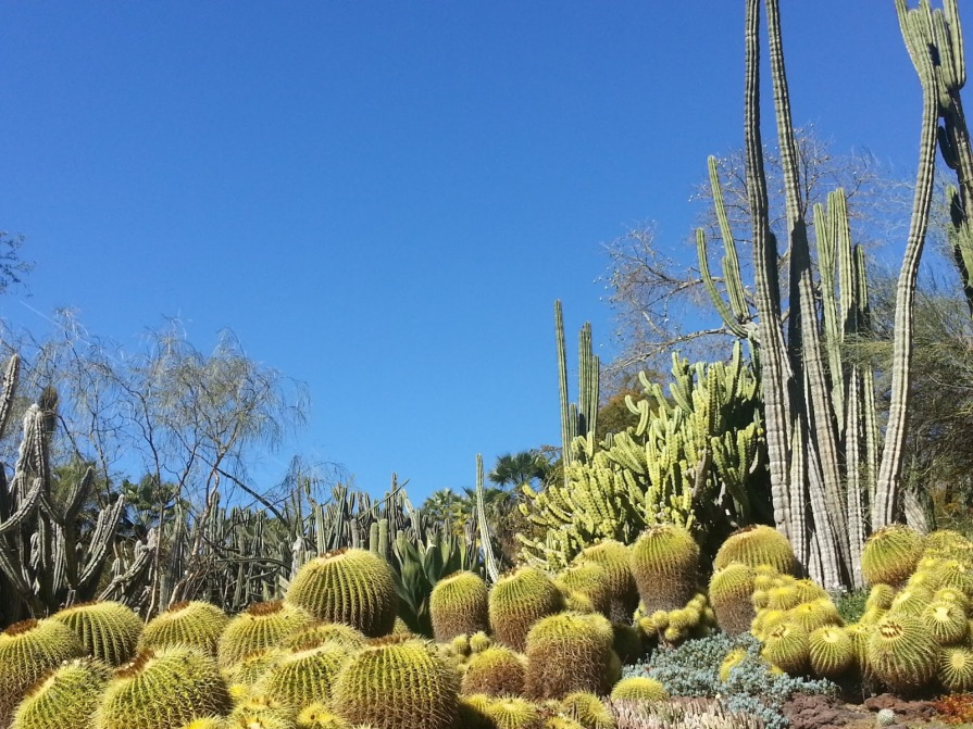 Huntington Library Cactus Garden 01