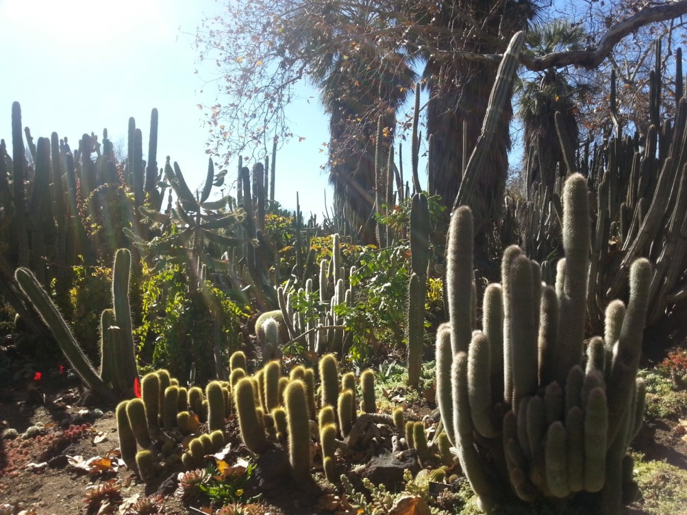 Huntington Library Cactus Garden 07