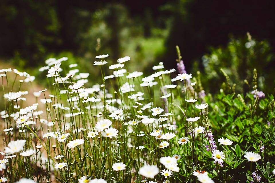 SLH wildflowers homepage