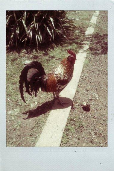 Hawaii - Kauai Waimea Chicken