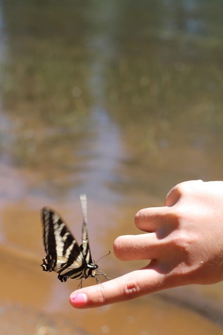 Pollack Pines Girls Weekend Jenkinson Lake Butterflies 2