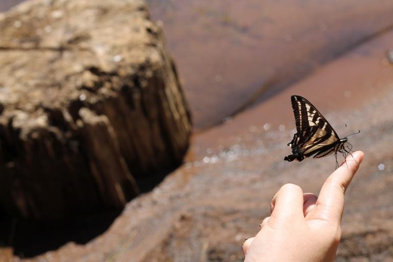 Pollack Pines Girls Weekend Jenkinson Lake Butterflies 3