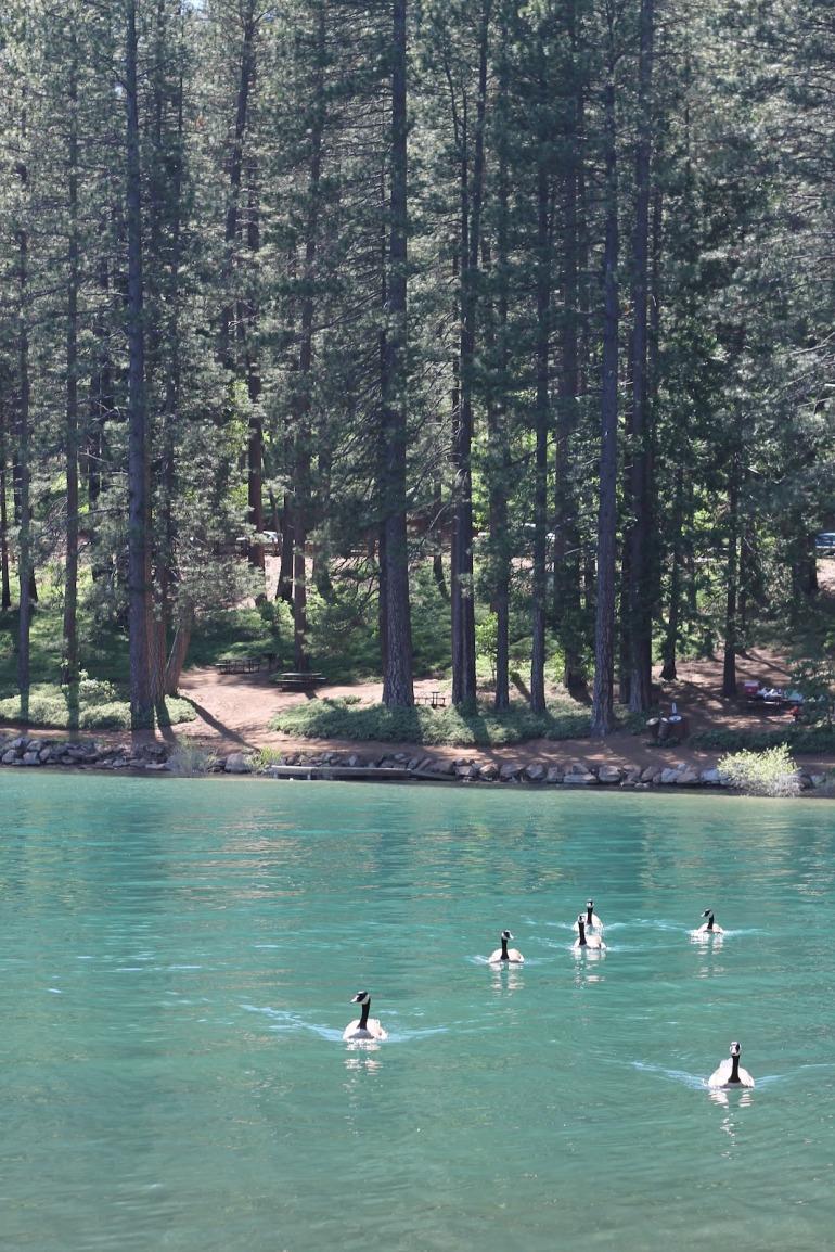 Pollack Pines Girls Weekend Jenkinson Lake Geese 1