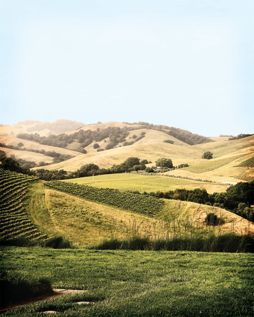 Wine Country Hills photo by Julie's Boutique