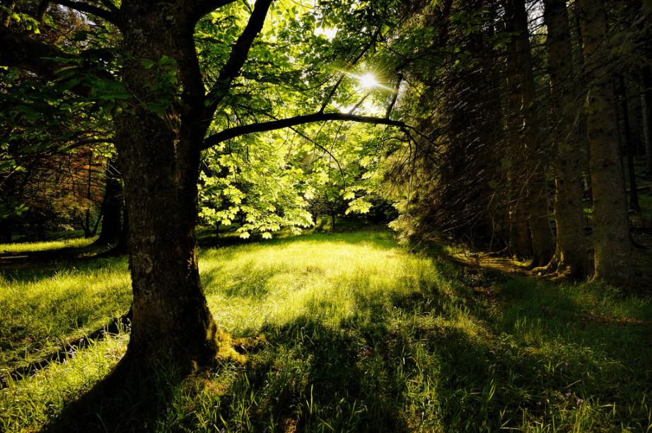 Hidden Meadow Click and Pray Flickr 2016-06-05