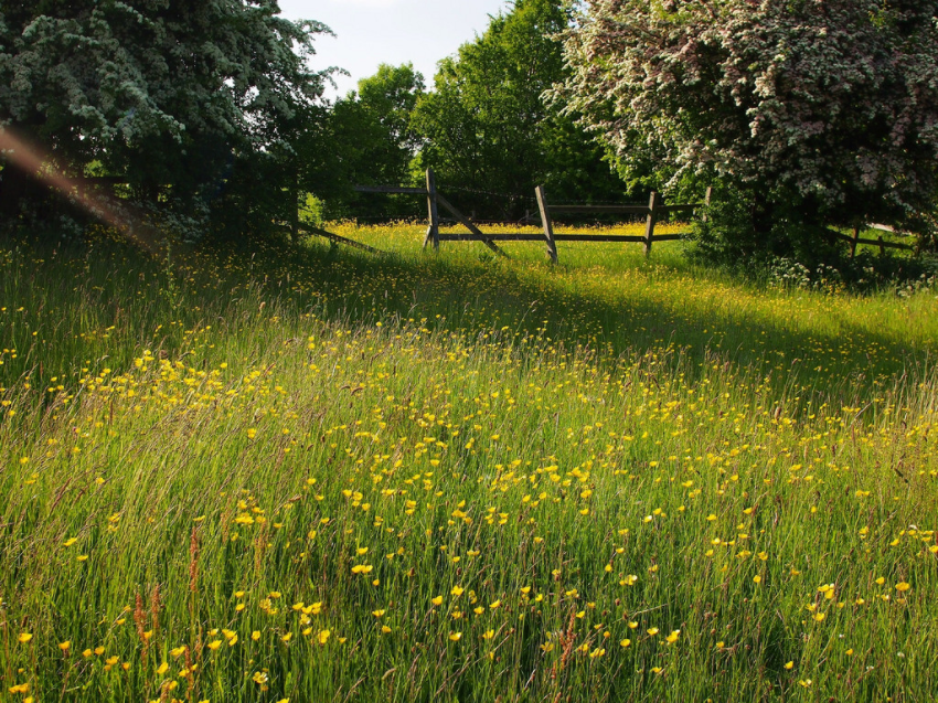 Meadow Andy Ely Flickr 2013-06-10