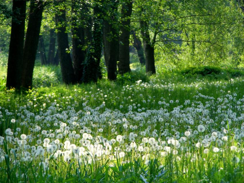 Meadow Halina P Flickr 2016-05-20