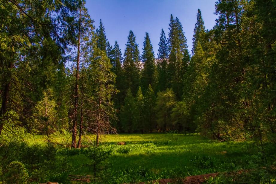 Meadow Sierra Marshland David Cross buffdawgus Flickr 2013-05-05