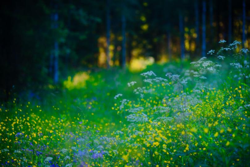 My Secret Meadow Lassi Kalleinen Flickr 2010-06-29