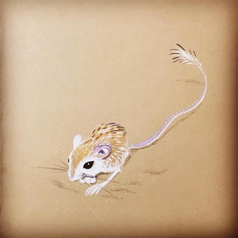 Jessica Love Illustration Desert Pocket Mouse Instagram JessLoveDraws