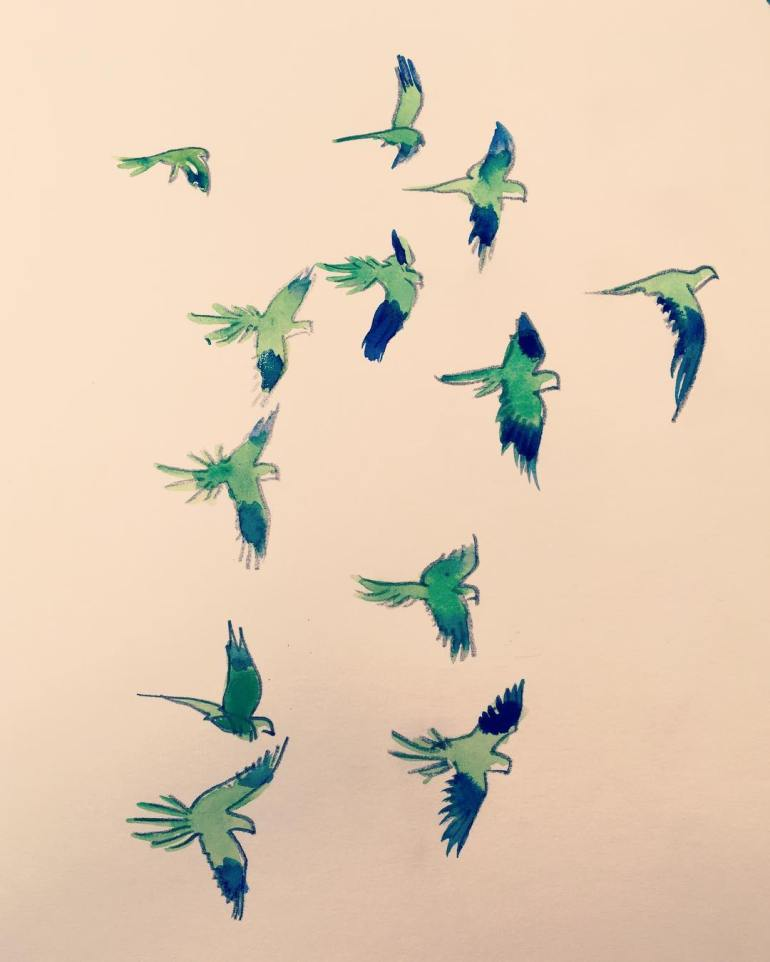 Jessica Love Illustration Pandemonium of Parrots Instagram JessLoveDraws