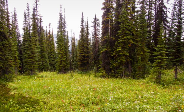 Alberta Canada Meadow Ray Clark Flickr 2013-08-16
